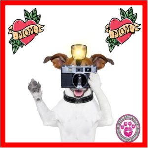 Paws for Mom Photos - benefiting Team Stinkykiss Rescue