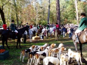 Thanksgiving Day - Blessing of the Hounds